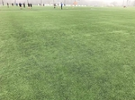 [Turf360 - Used Field Turf 50' L x 15' W Rolls]